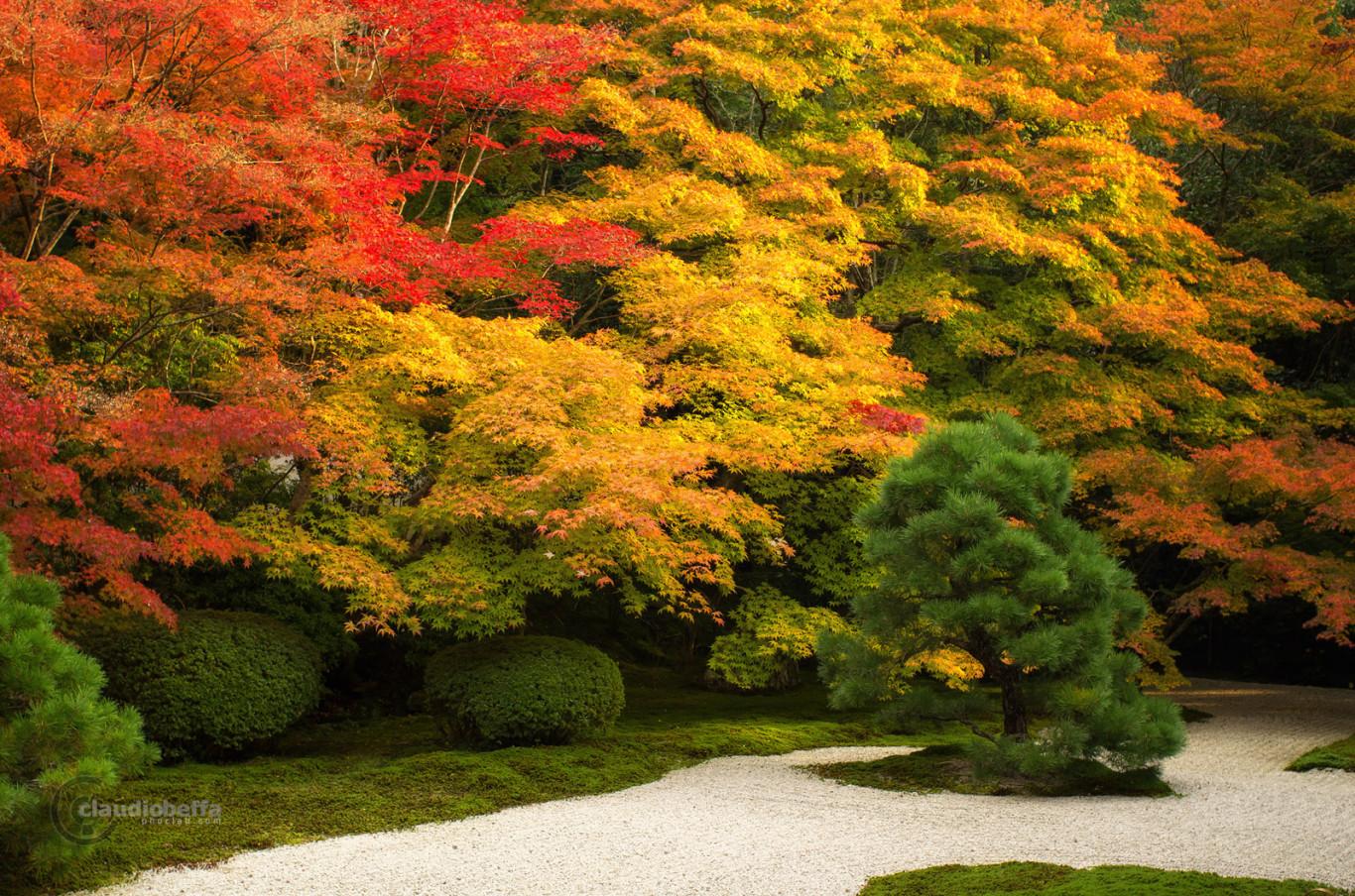 Kyoto Autumn Red Momiji Garden Japan