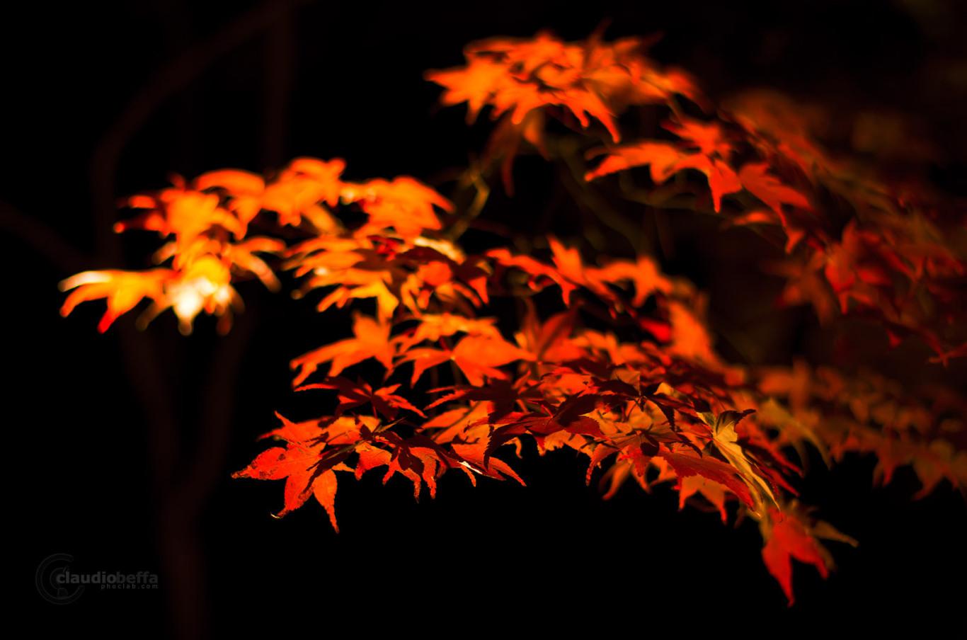 Autumn Soul Red Momiji Night Japan