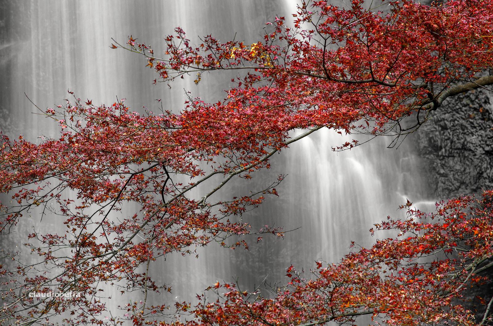 Red Momiji Minoh Waterfalls Autumn Osaka Japan