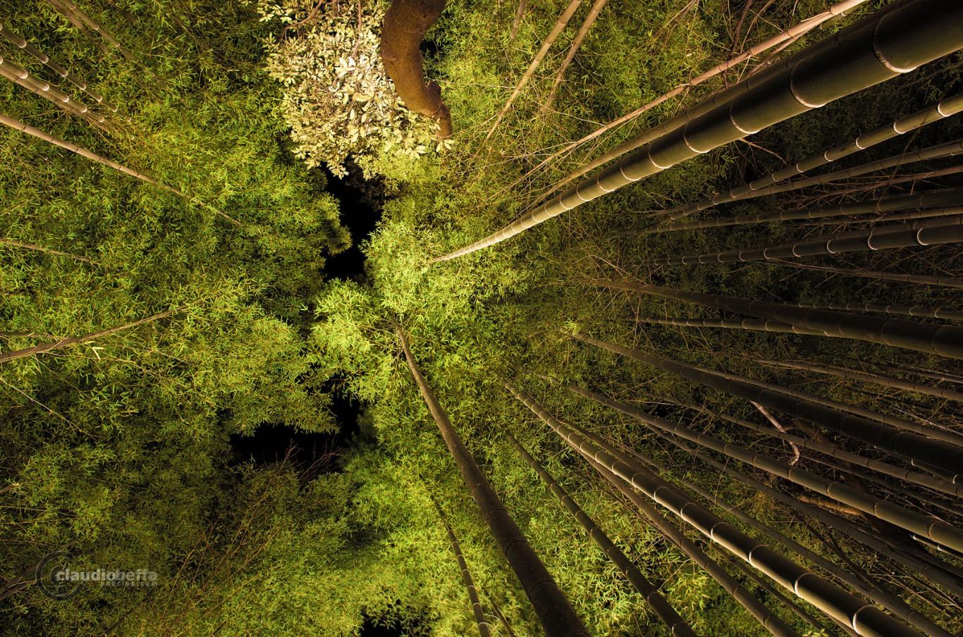 Kyoto Arashiyama Bamboo Forest Grove Green Creature Eyes