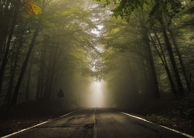 Road, Forest, Mist, Fog, Light, Mount Amiata, Italy, Tuscany