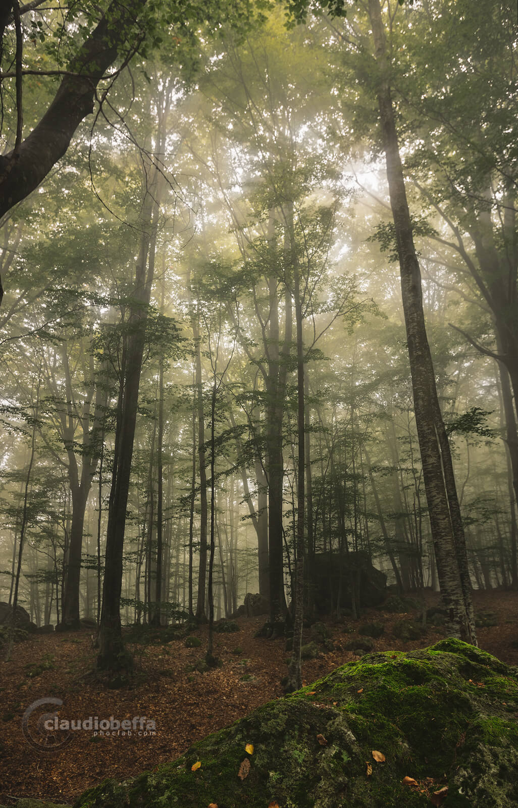 Forest, Mist, Fog, Light, Green, Mout Amiata, Ancient, Italy, Tuscany
