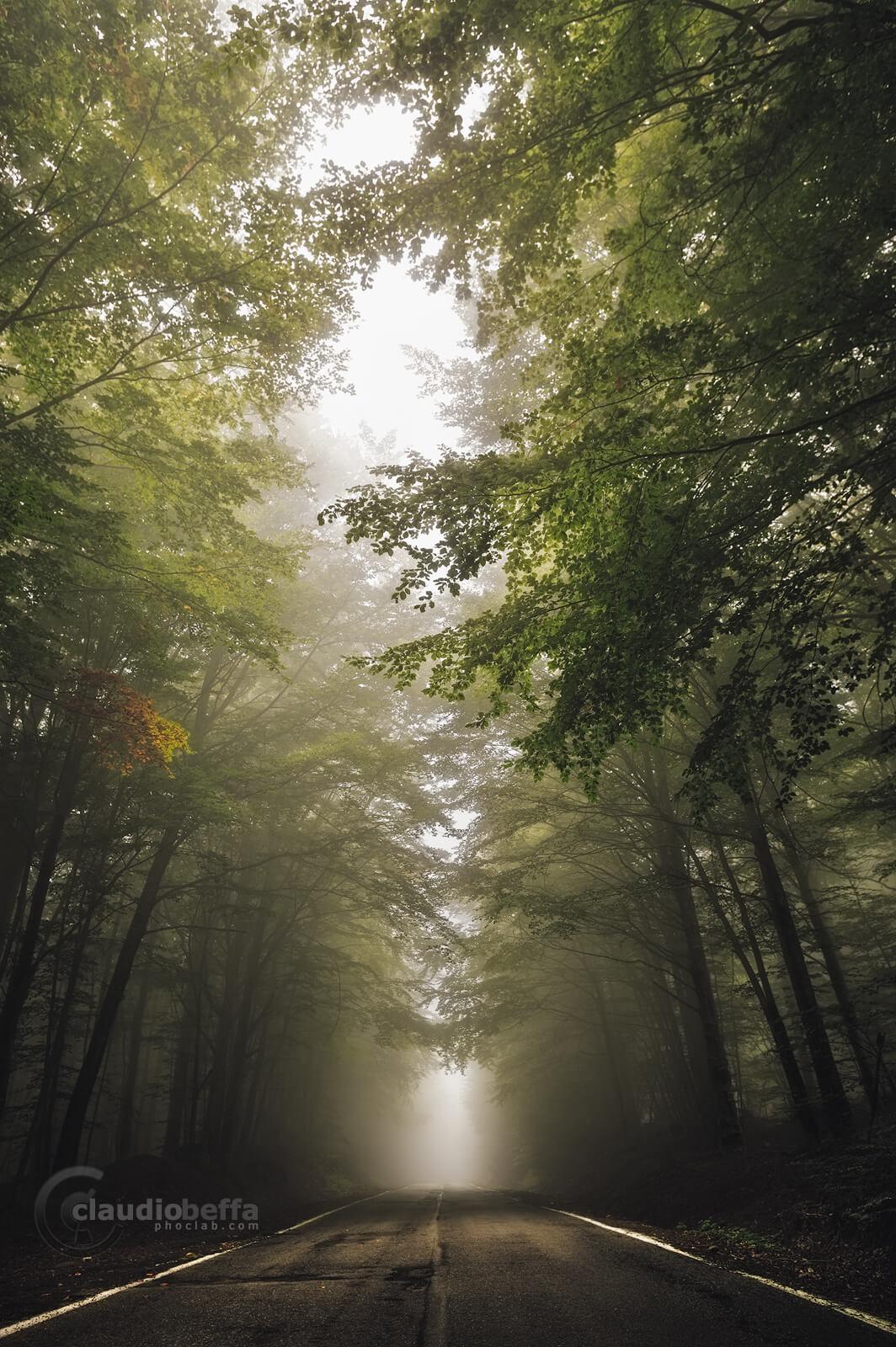 Road, Forest, Mist, Fog, Mount Amiata, Italy, Tuscany, Forest of Mount Amiata