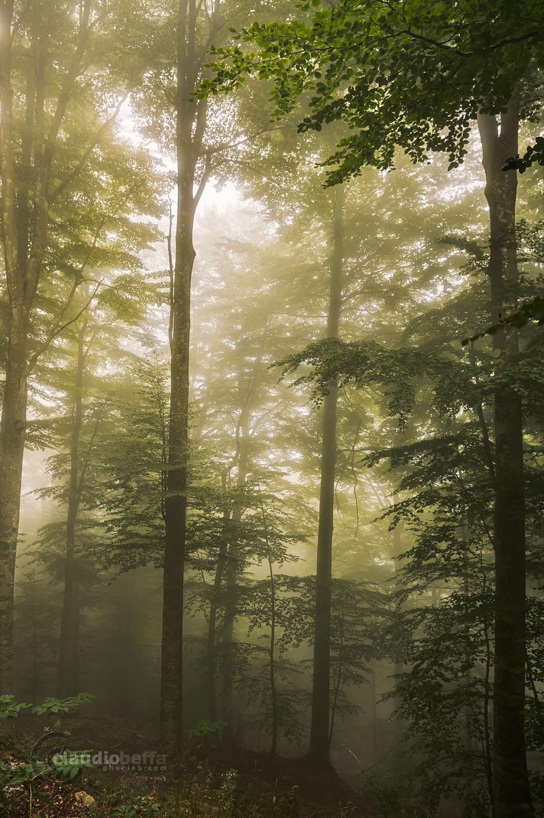 Forest, Mist, Fog, Fairy-tale, Light, Mount Amiata, Italy, Tuscany