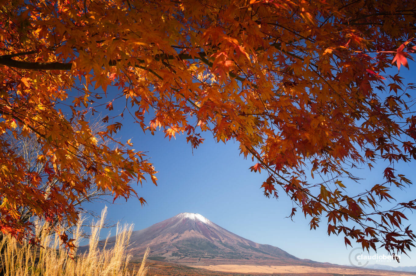 Mount Fuji, Fuji, Japan, Chubu, autumn, autumn wonderland, fall, momiji, susuki, red, orange, travel, phoclab