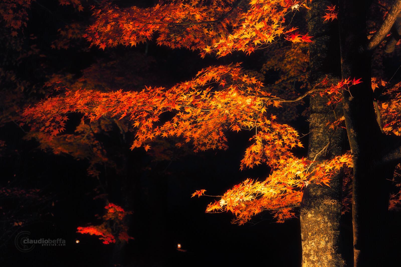 Mount Fuji, Fuji, autumn, fall, Momiji grove, red, leaves, trees, grove, light, darkness, travel, photography, phoclab