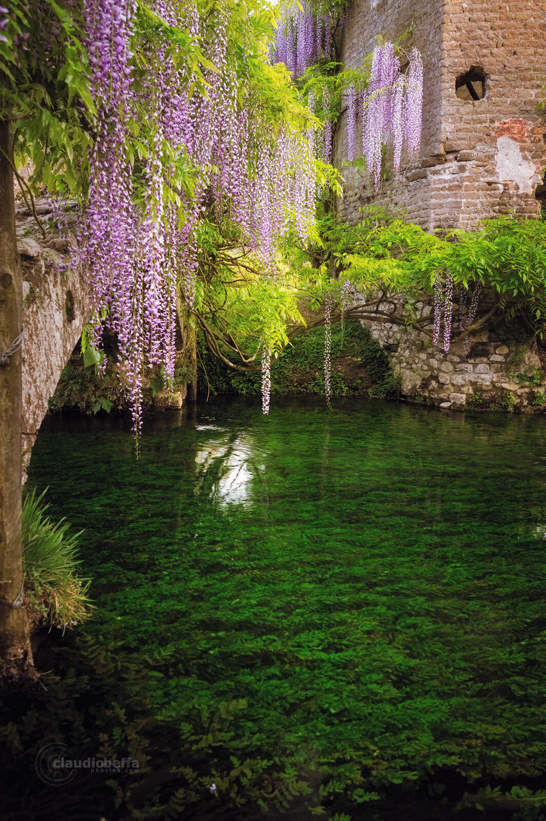 Garden of Ninfa, Garden, Ninfa, Italy, Blooming life, Wisteria, flowers, Nature, River, Bridge, Spring, Travel, Travel Photography, Ancient, Romantic