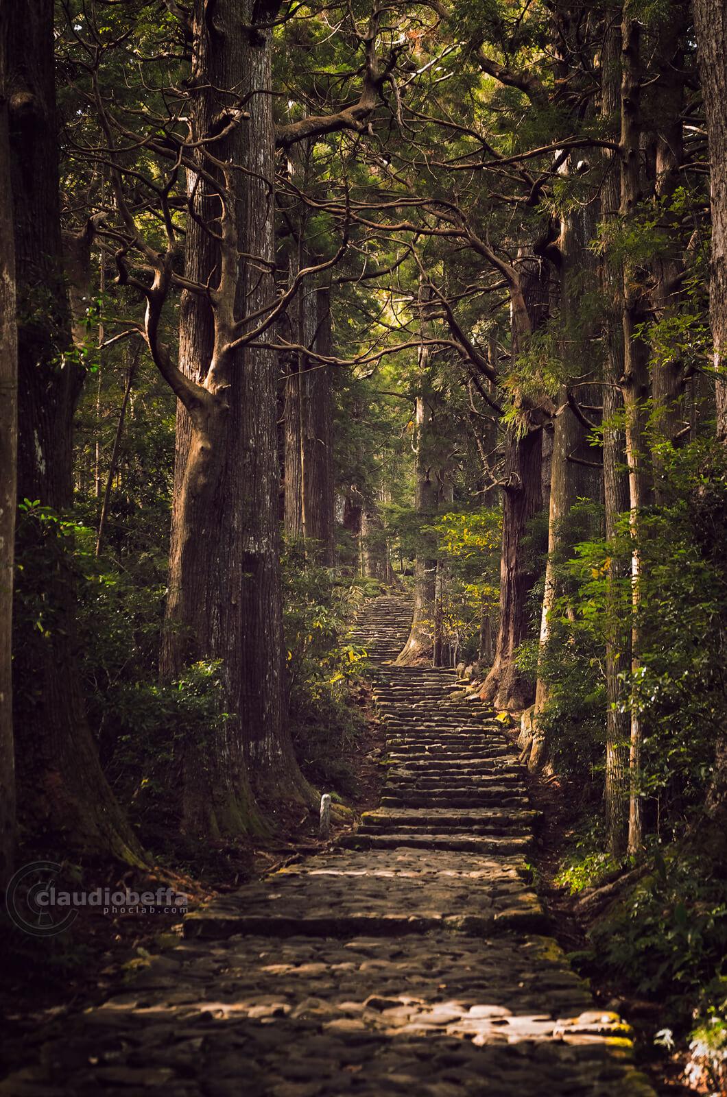 Daimon-zaka, Stairway, Pilgrimage path, Forest, Cobblestones, Cedar trees, Suginoki, Kii peninsula, Kumano, Japan