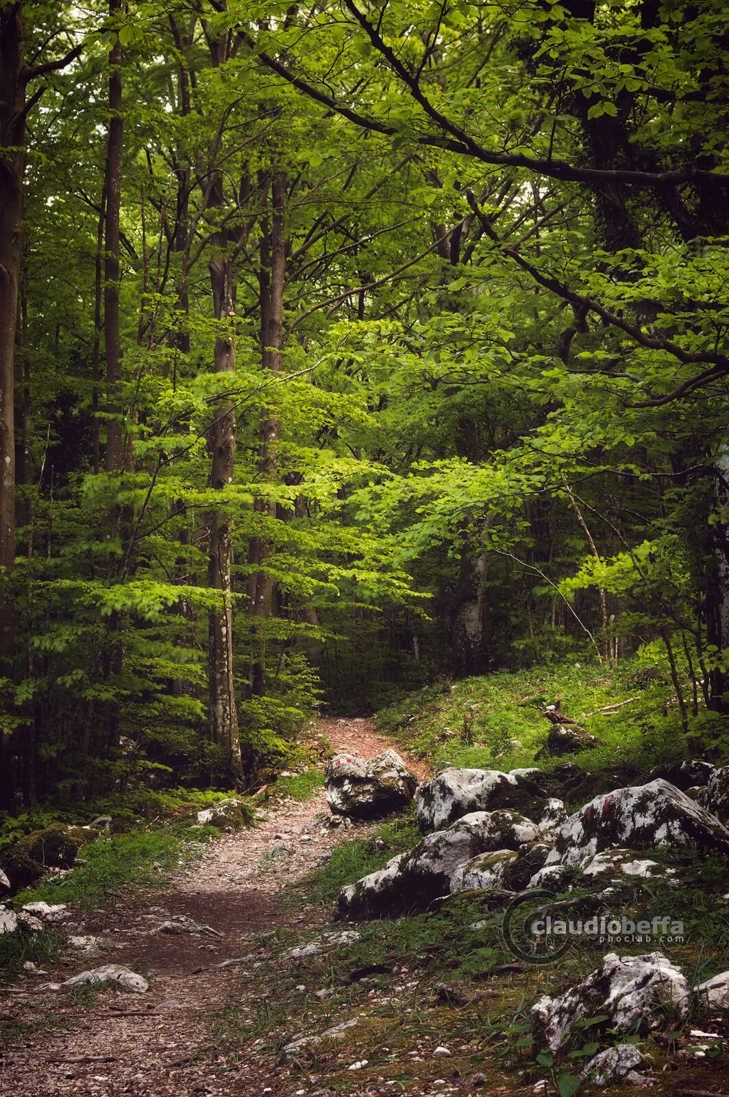 Path, Forest, Mount Cucco, Umbria, Italy, Nature, Trees, Deep into the forest