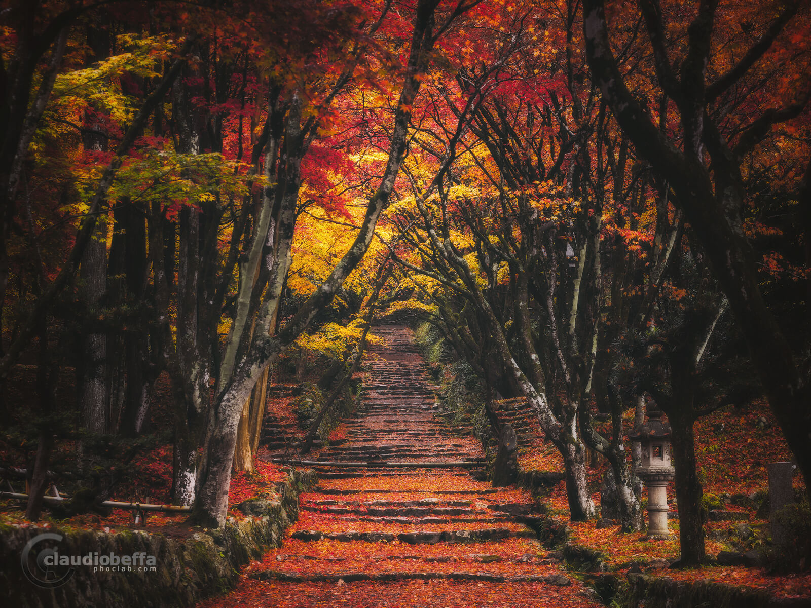 path to the forbidden forest, Shrine, Forest, Momiji, Autumn, Japan, Nature, Travel