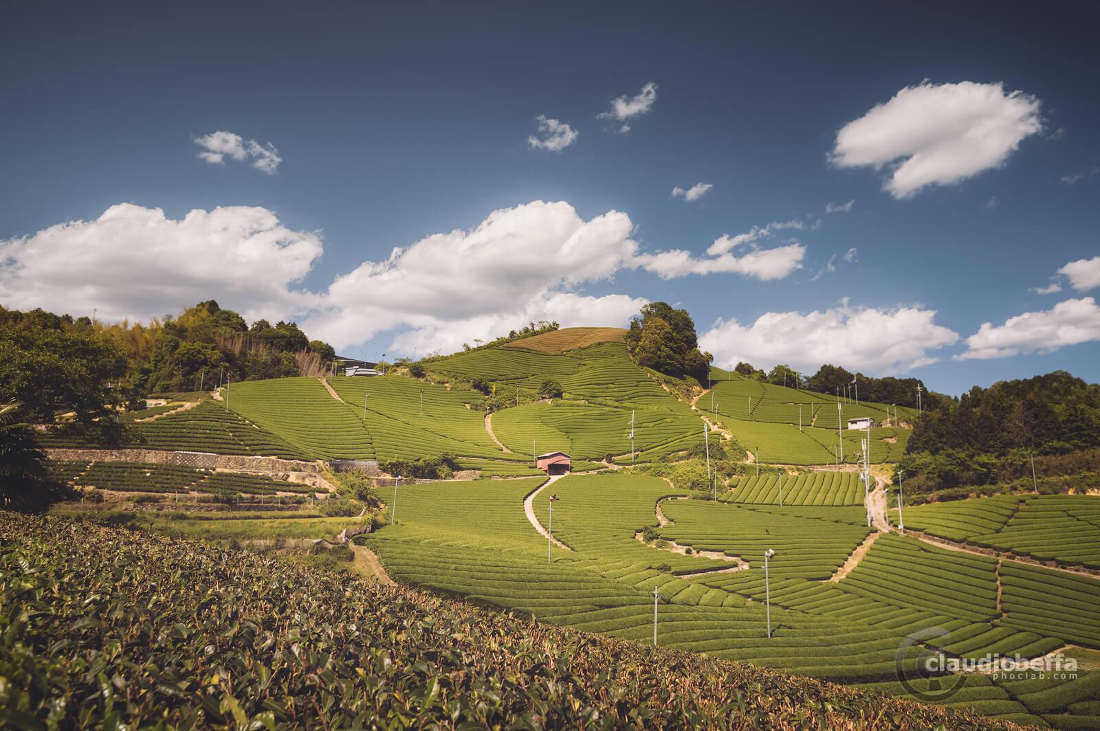 Fields of tea on the hills of Wazuka, Japan, Tradition, Travel.
