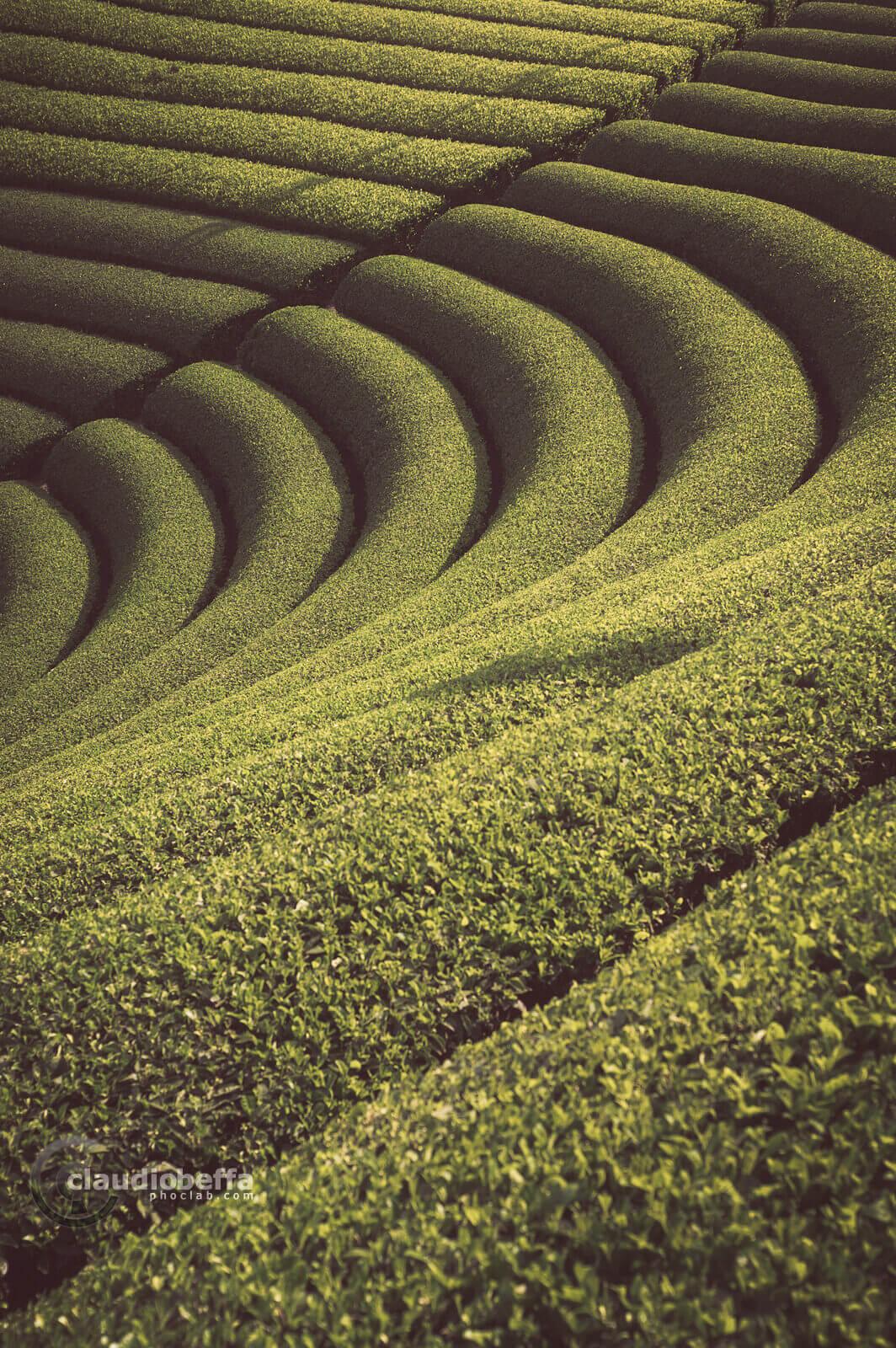 Tea, Plantation, Wazuka, Kyoto, Japan, Countryside, Tradition, Travel, Landscape, Tea culture in Japan, Enkei, Tea field