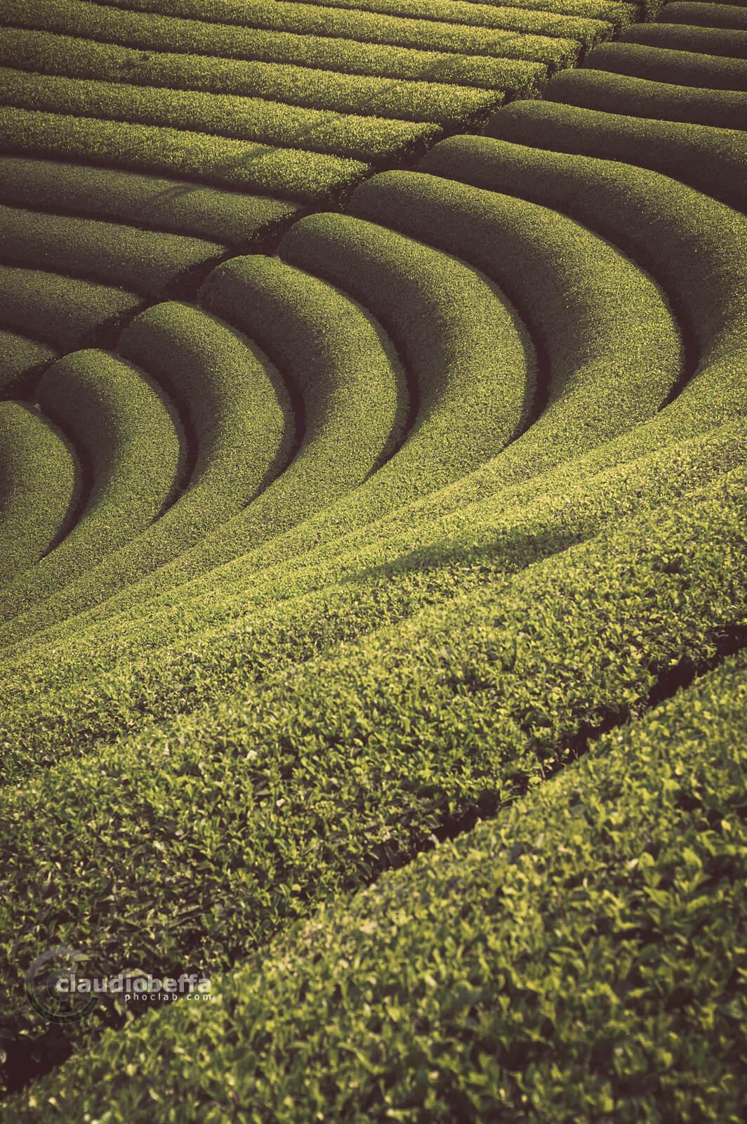 Enkei circular shaped tea field, Wazuka, Japan, Tradition, Travel.