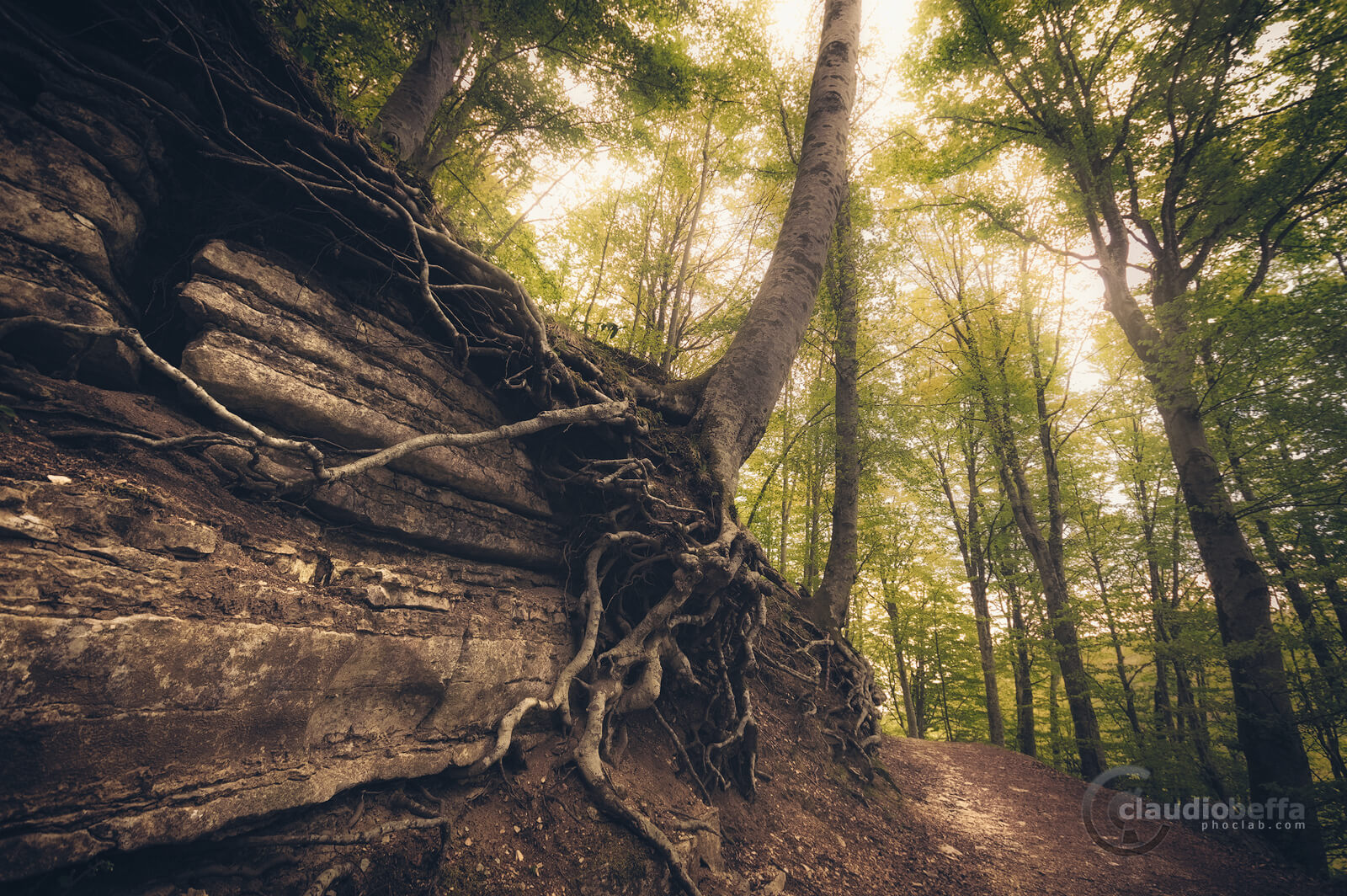 Path, Forest, Woods, Mount Cucco, Umbria, Italy, Nature, Trees, safe path, beechwood, light, roots, grasping tightly