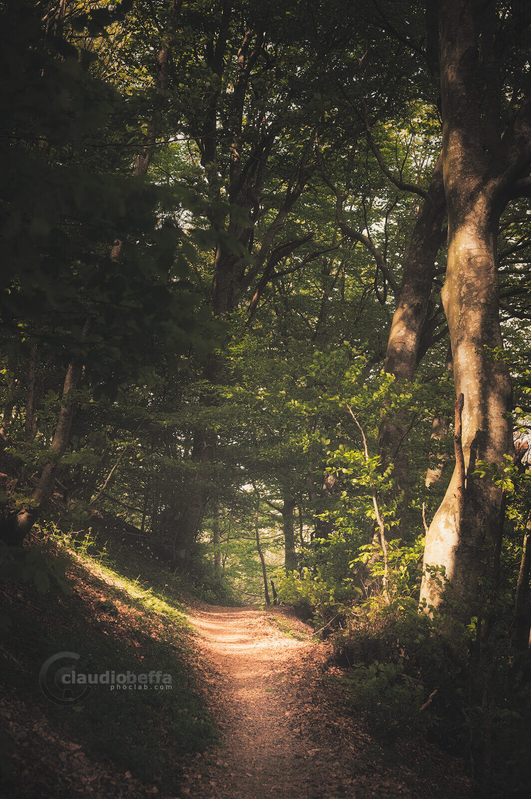 Path, Forest, Woods, Mount Cucco, Umbria, Italy, Nature, Trees, safe path, beechwood, light