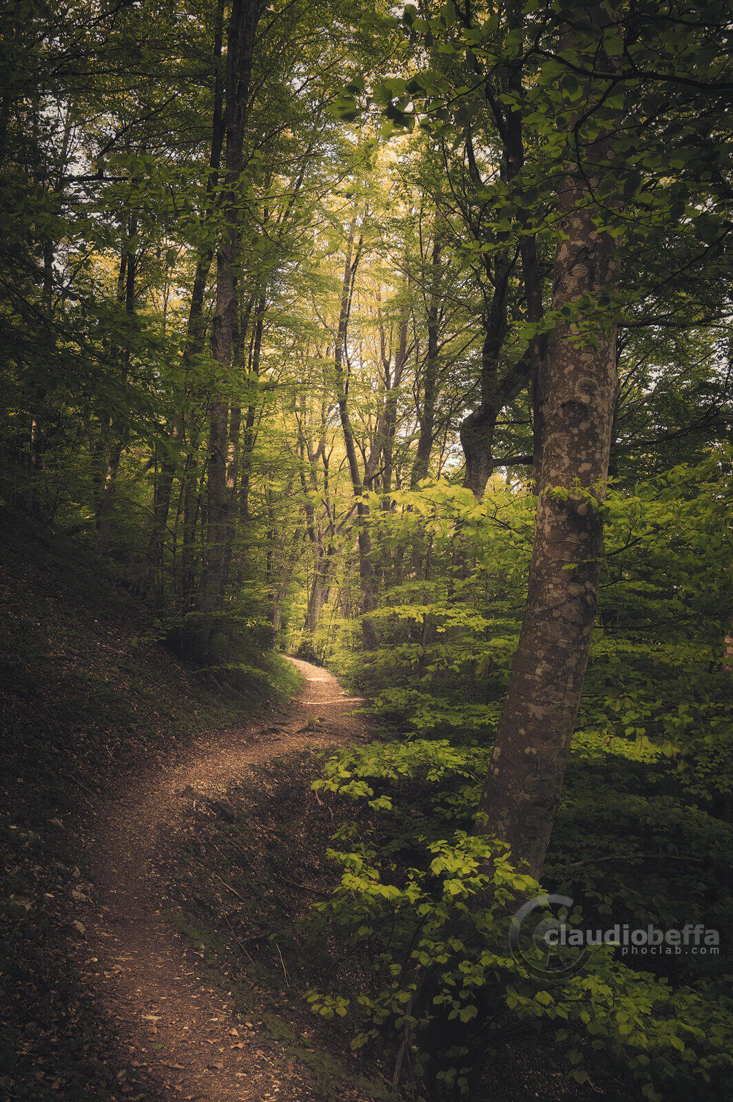 Path, Forest, Woods, Mount Cucco, Umbria, Italy, Nature, Trees, path into the beechwood, beechwood